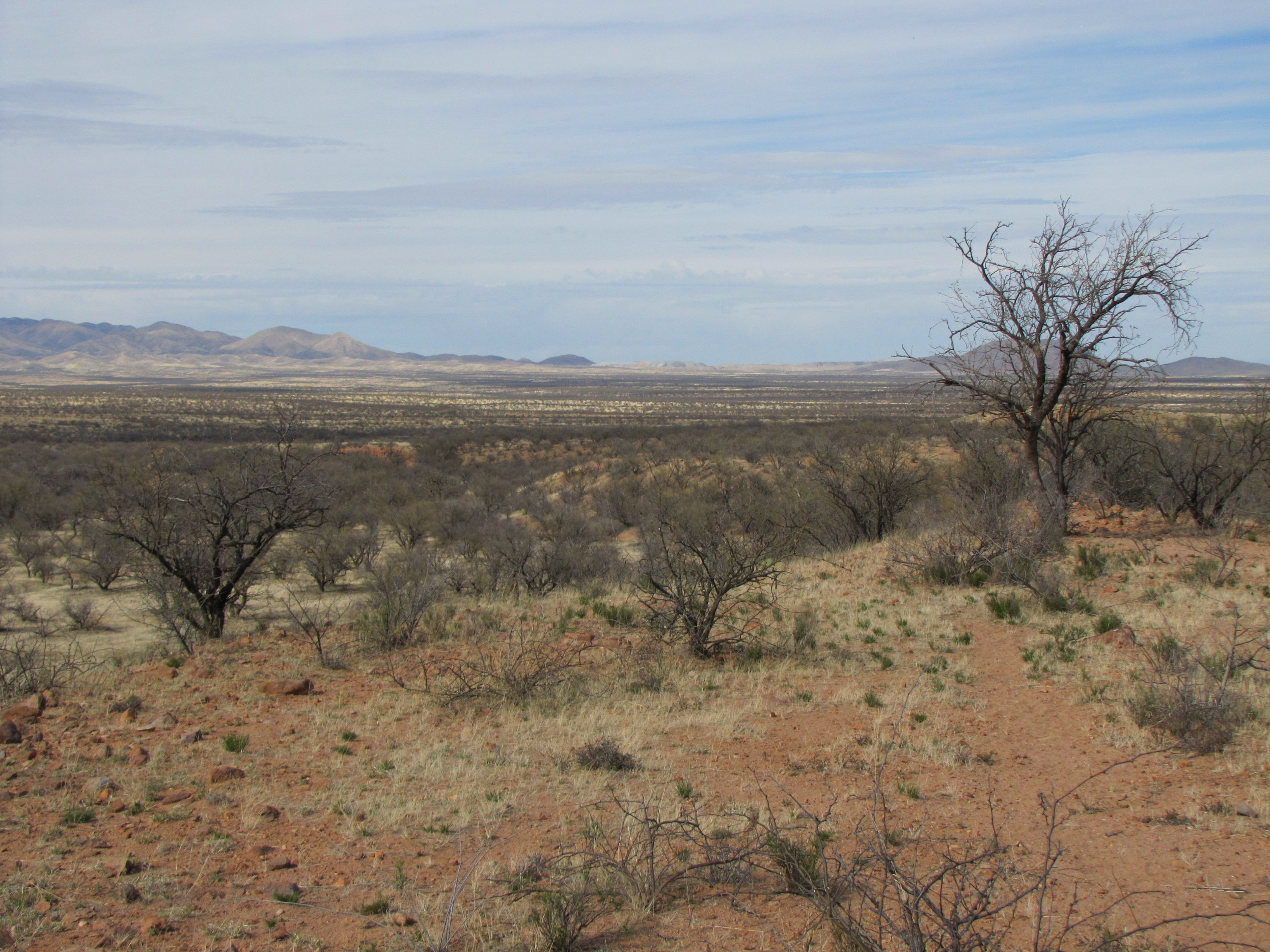 A 14-year-old was raped last winter in this remote spot east of Arivaca, Ariz. Photo by Jude Joffe-Block/Fronteras Desk