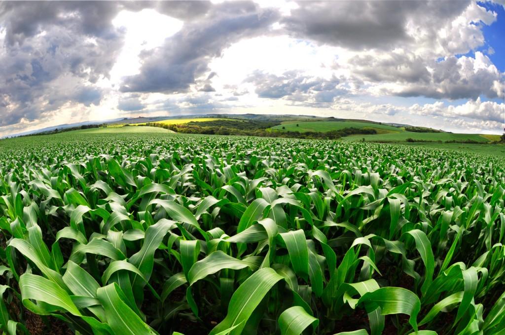 Corn-based ethanol is environmentally damaging in the short run | PBS  NewsHour