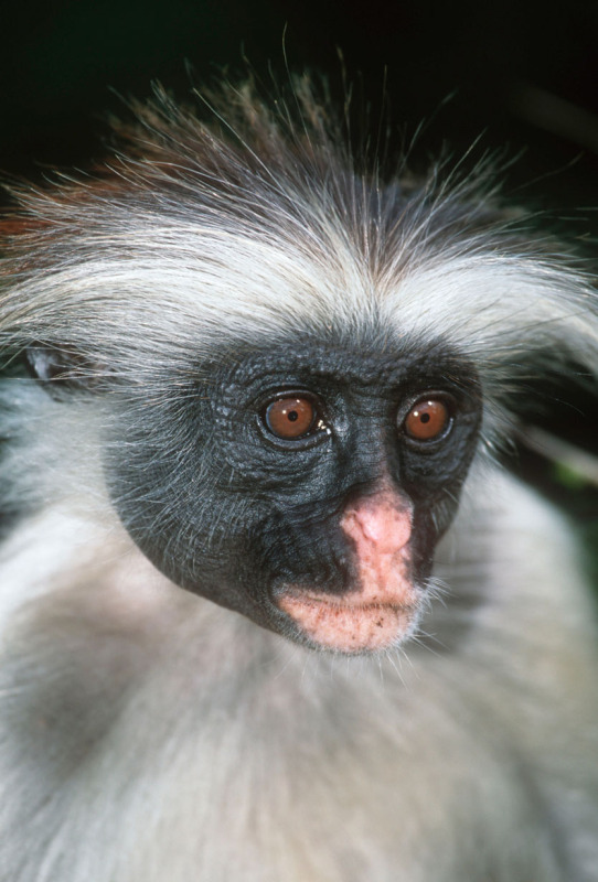 Photo copyright Martin Harvey / WWF-Canon