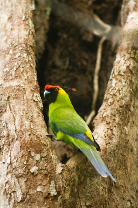 Photo copyright Roger Leguen / WWF-Canon