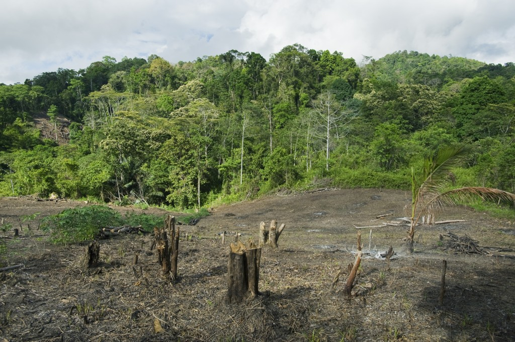 indonesia reaches highest deforestation rate in the world pbs newshour