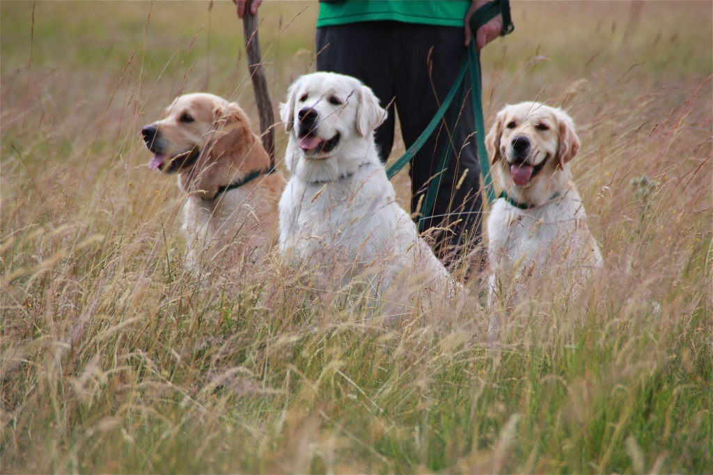 Tomich, Scotland is where Lord Tweedmouth first bred the golden retriever, at his estate named Guisachan. Photo by Lorna Baldwin