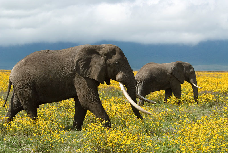 Elephants Dont Eat Peanuts And 10 Other Things You Should Know