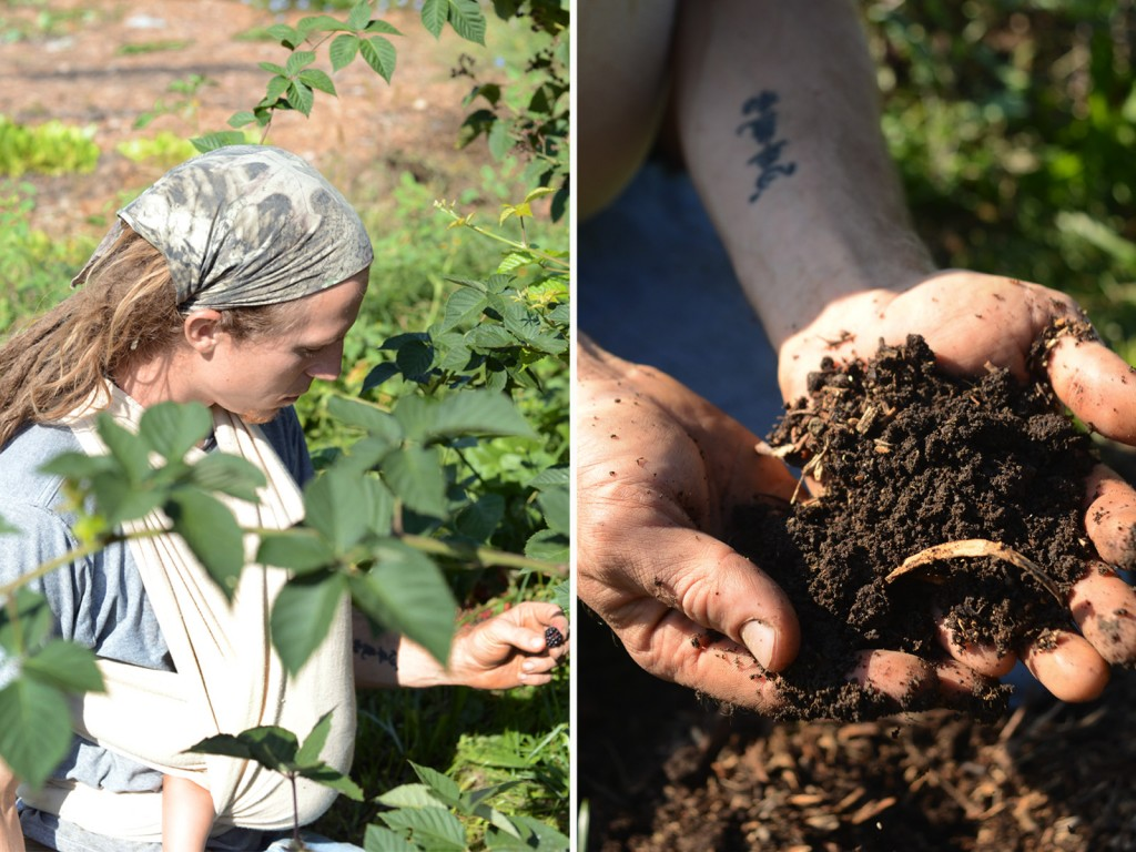 Left: Danny Swan picks blackberries at Farm 18. Right: Swan holds up a handful of the rich soil developed after years of composting and fertilizing the land. Photo by Ariel Min/PBS NewsHour