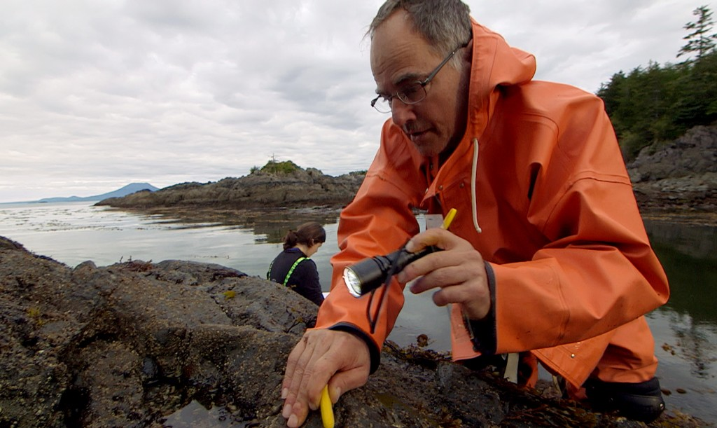 Pete Raimondi, professor at the University of California, Santa Cruz, searches for tiny sea stars that hide in the cracks and crevices of rocks on Pirate's Cove in Alaska. Photo by Greg Davis/KCTS9