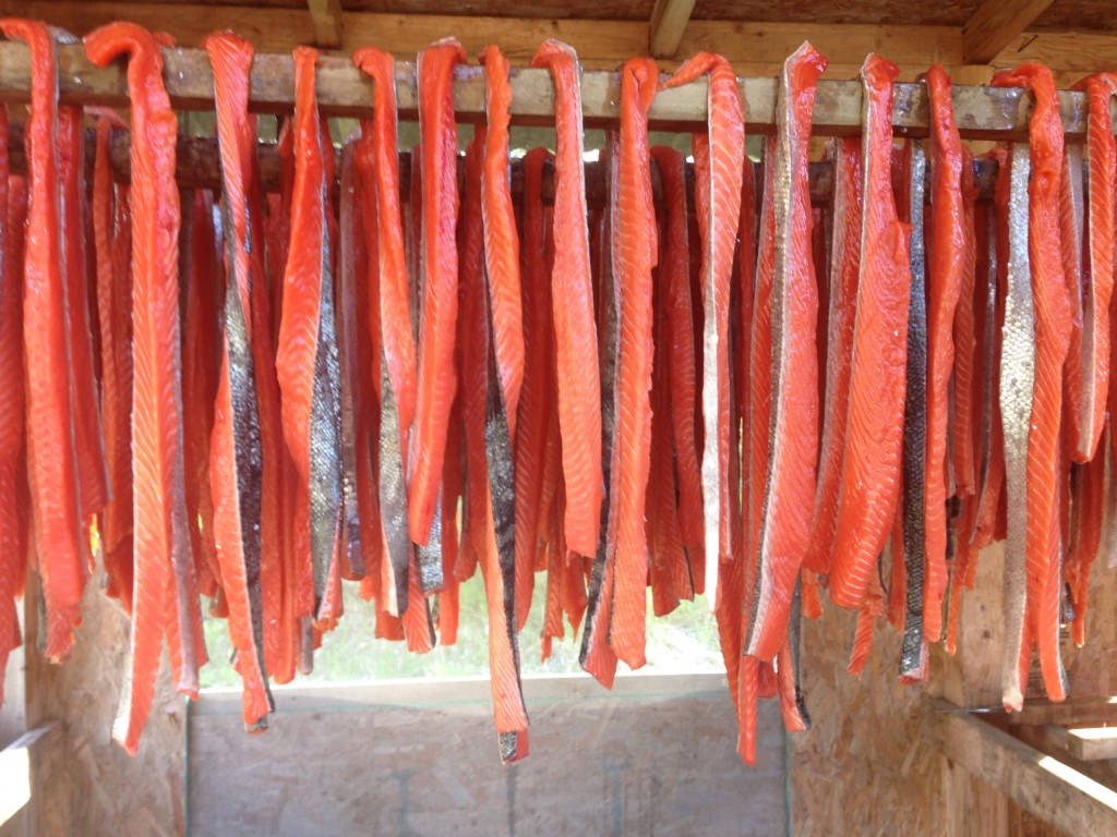 Salmon strips prepared by the Williams family of Dillingham, Alaska will be smoked and preserved for the winter. Photo courtesy: Sassa Williams