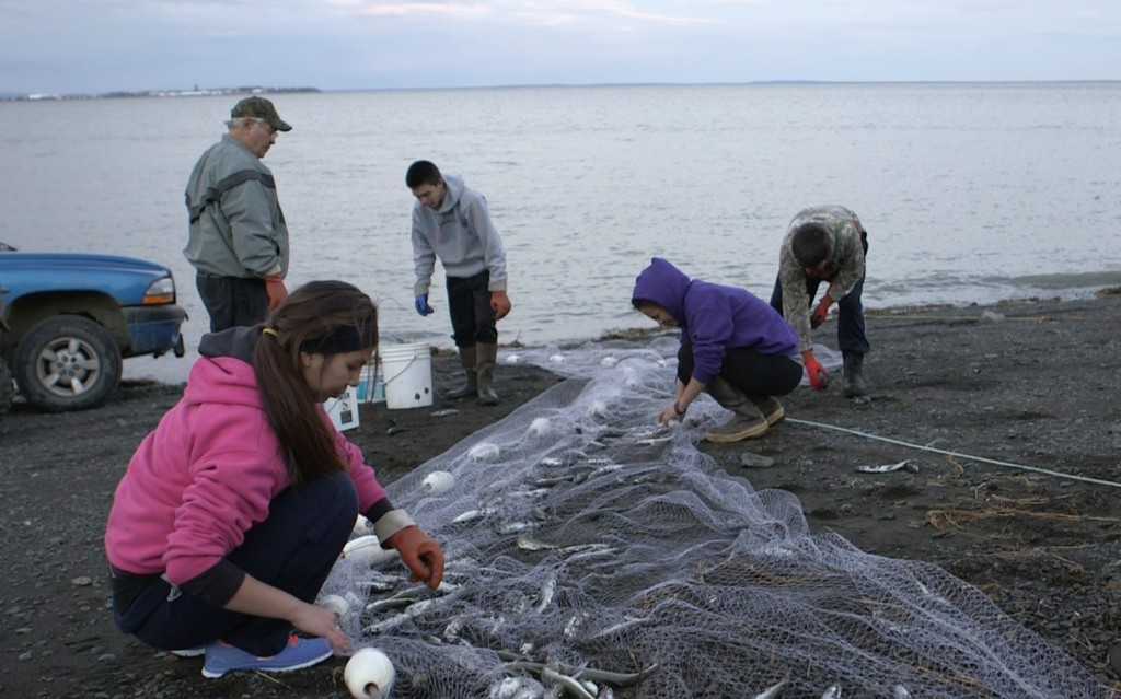 Brittney George (front), William Johnson (standing left), Chris, Sassa and Grant Williams pull smelt out of a net on Kanakanak Beach near Dillingham, Alaska. Photo by Mike Fritz/PBS NewsHour
