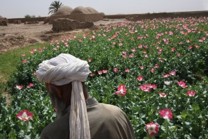 Afghan opium farmer. Photo by John Moore/Getty Images