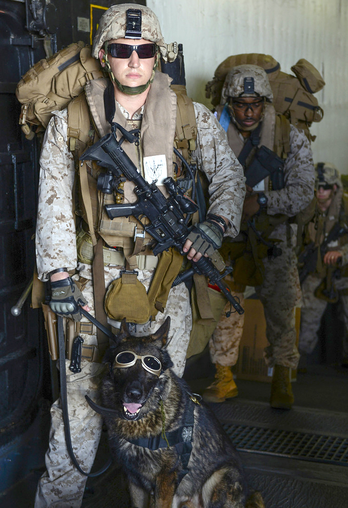 Sirius with his new owner, Marine Cpl. Eric Roethler. Photo by U.S. Navy