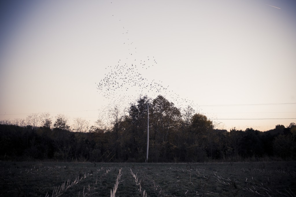 It is difficult to determine where the tree leaves end and the birds begin in this photo that Reynolds captured near Elizabethtown, Kentucky. A handful of her photographs will be on exhibit at the Ogden Museum of Southern Art in New Orleans starting on Dec. 5.  Photo courtesy of Tamara Reynolds