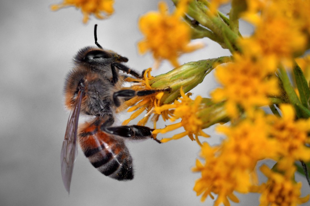 Loss of honey bees and other pollinators could mean malnutrition for millions around the world