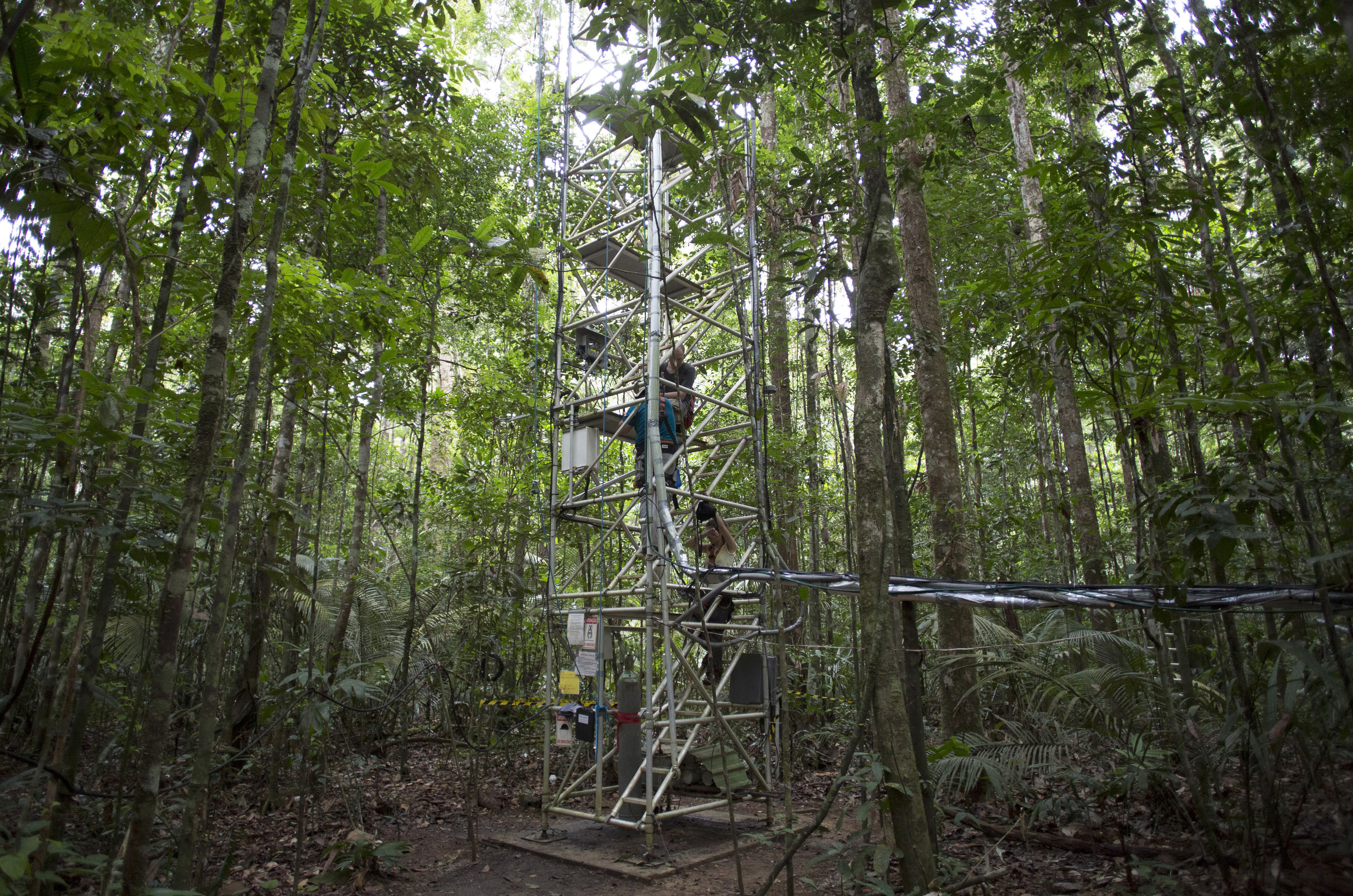Researchers go up the Amazon Tall Tower Observatory (ATTO) in Sao Sebastiao do Uatuma in the middle of the Amazon forest in Amazonas state January 9, 2015. Photo by Bruno Kelly/Reuters