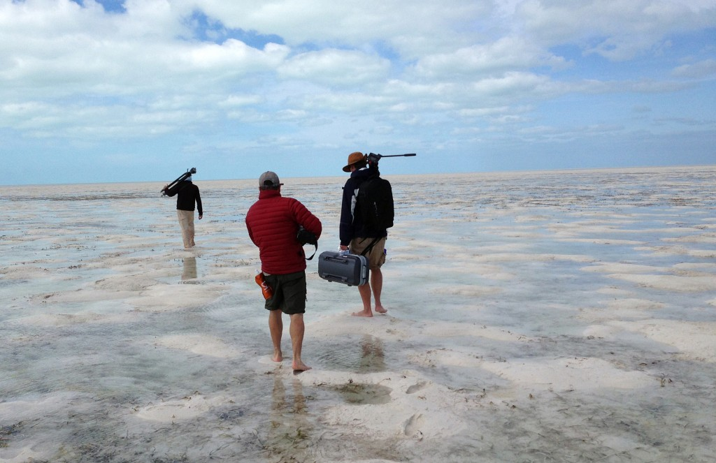 The NewsHour film crew follows National Audubon Society scientist Walker Golder through tide pools to find an ideal spot for filming shorebirds on the Joulter Cays. Photo by Cat Wise