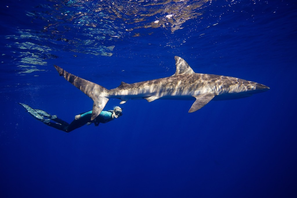 photo essay how to swim safely sharks newshour