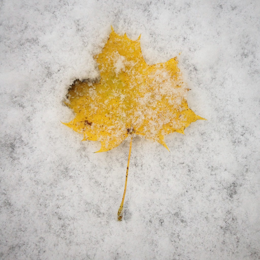 A leaf lays on the snow in Bangor during a fall storm in central Maine. The storm hit just a few days before Election Day. Photo by Brian Feulner/Bangor Daily News