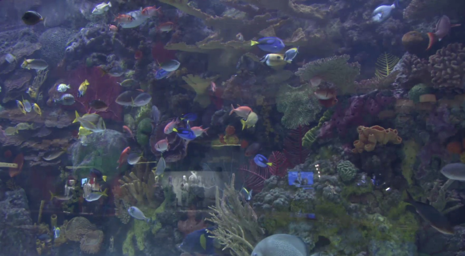 Why can't captive breeding of saltwater aquarium fish catch on