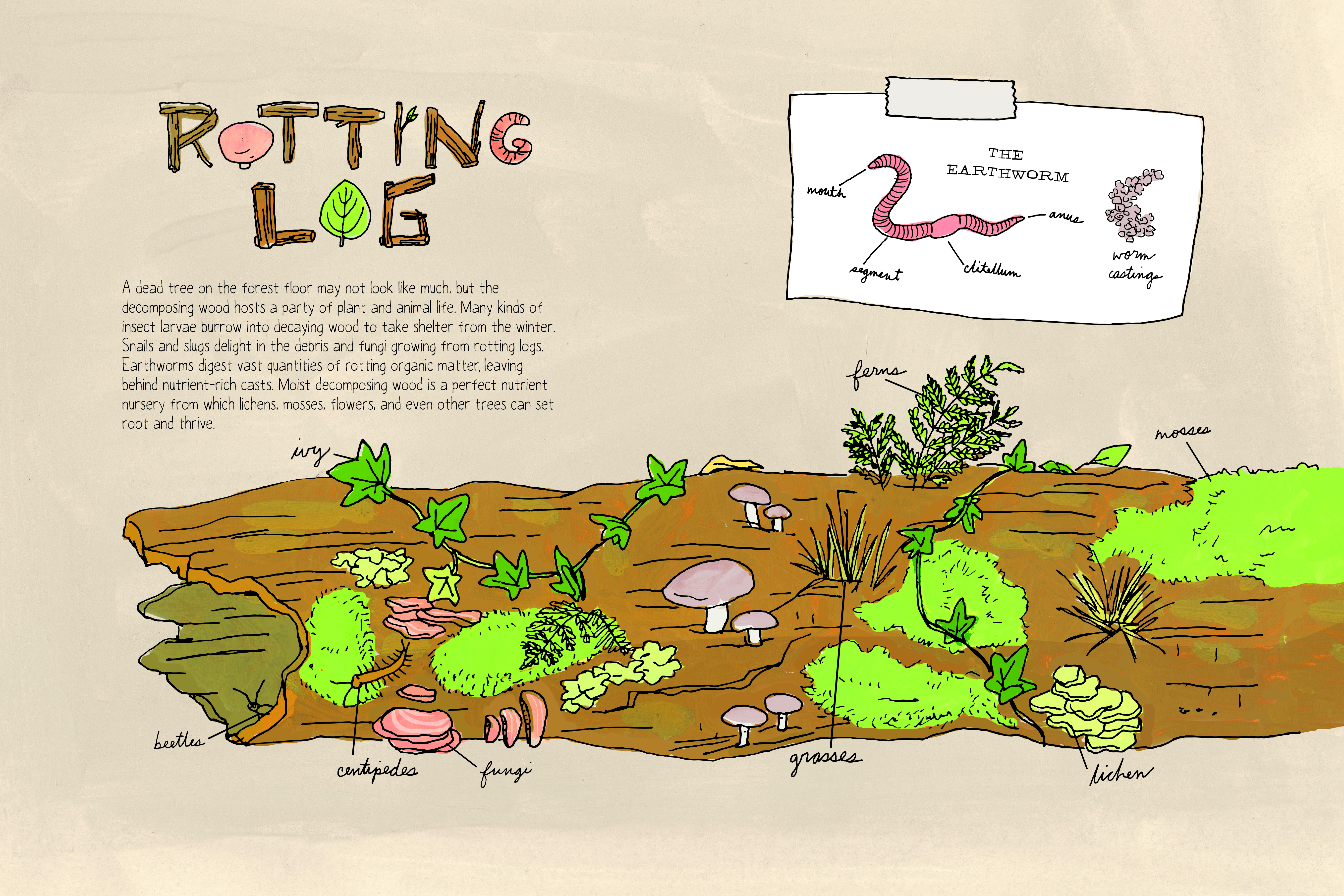 """Tucked in among several illustrations of animals, Rothman includes objects like a rotting log, which wouldn't necessarily receive a lot of attention of a nature walk. Excerpted from """"Nature Anatomy"""" by Julia Rothman. Used with permission of Storey Publishing"""