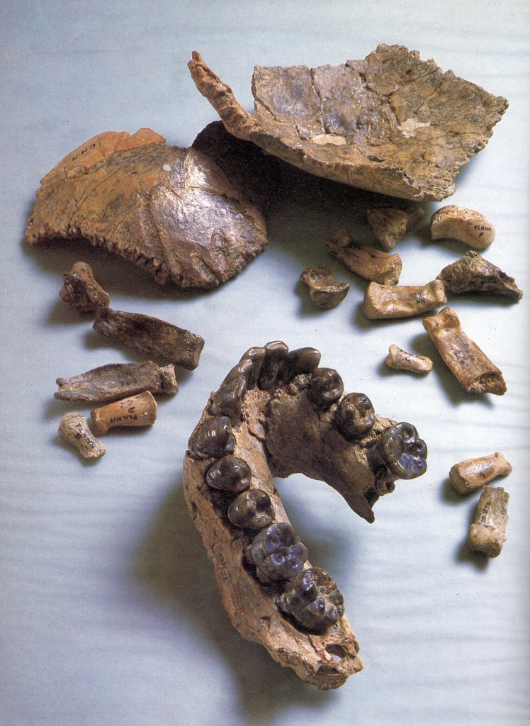This Jawbone May Change Everything We Know About Early Human History