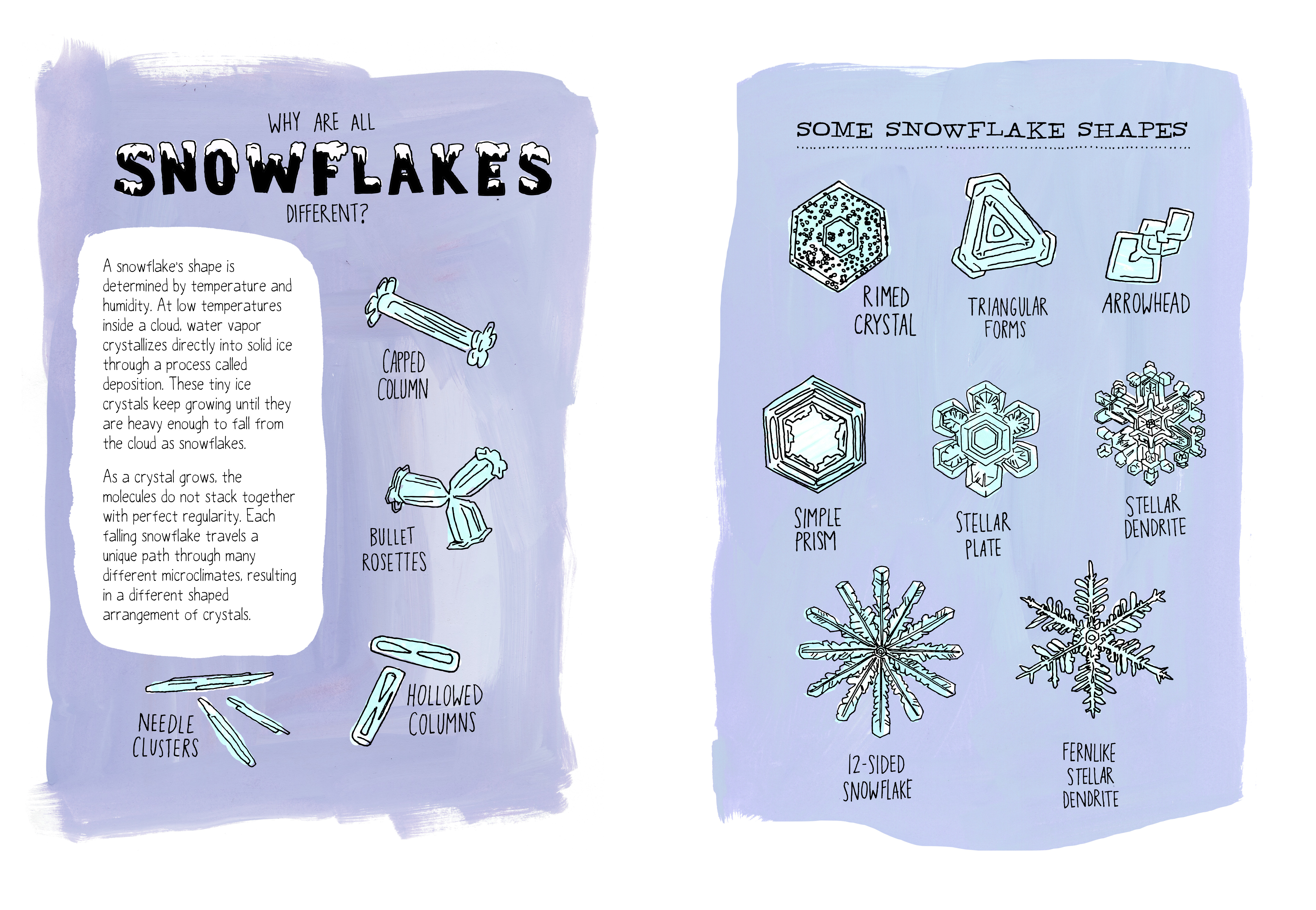 "Rothman drew several shapes a snowflake can take. Excerpted from ""Nature Anatomy"" by Julia Rothman. Used with permission of Storey Publishing"