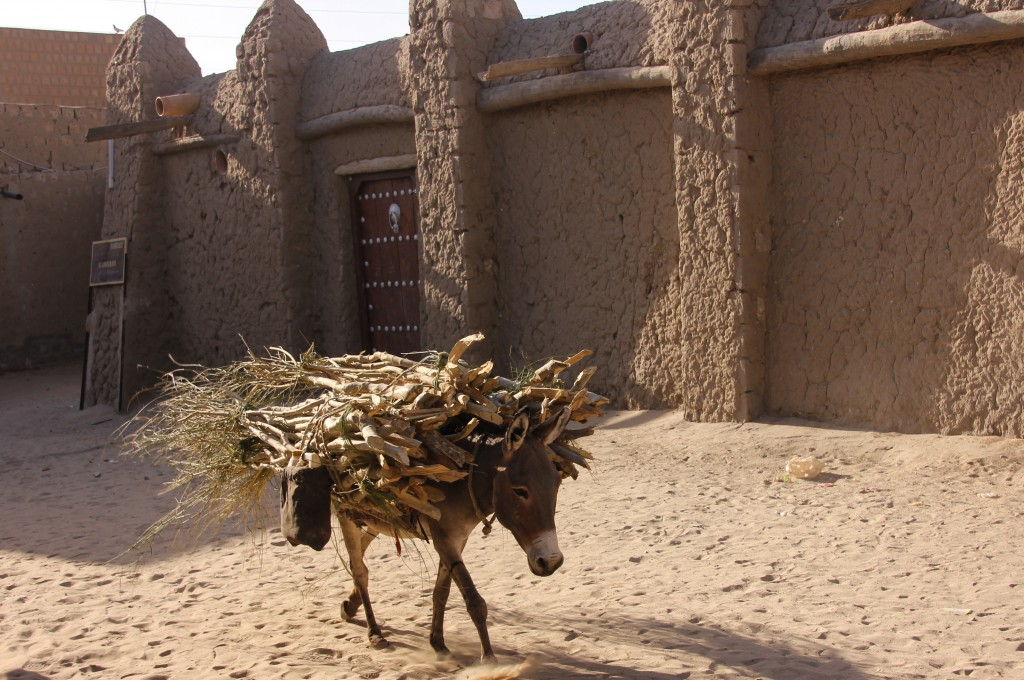 A donkey walks on the sandy streets of Timbuktu. Still a common mode of transportation in the North of Mali, donkeys often carry food and other goods. In 2013, they were part of a dramatic rescue mission, helping to carry thousands of ancient manuscripts out of Timbuktu to the safety of Bamako after jihadists seized the city. Photo by Molly Raskin