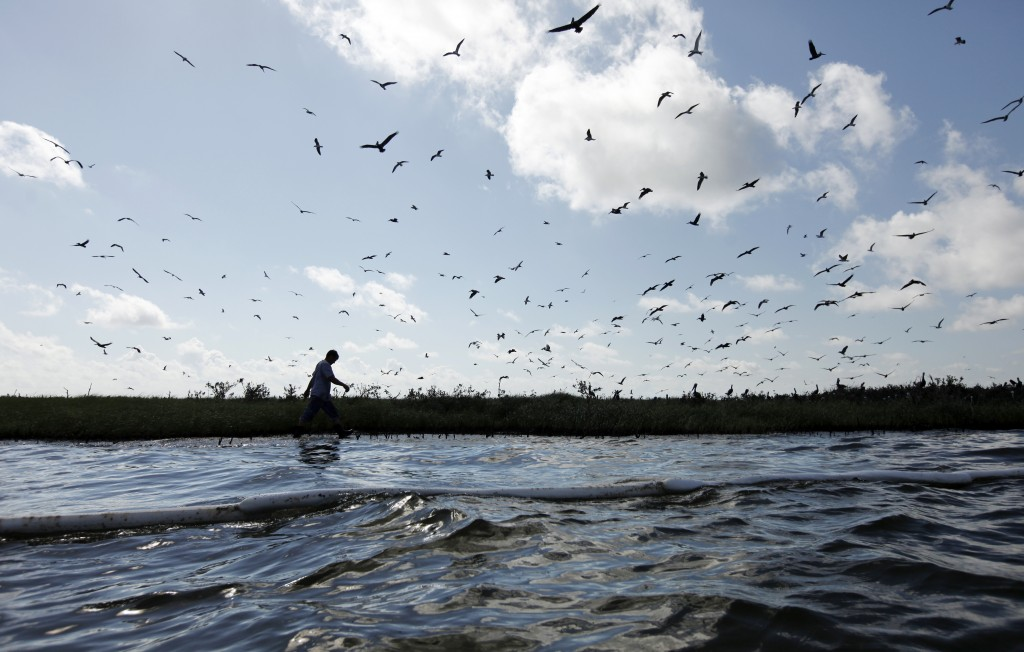 Island in Oil A worker walks along the coast of an island that is home to hundreds of brown pelican nests as well at terns, gulls and roseate spoonbills, May 22, 2010. (AP Photo/Gerald Herbert)