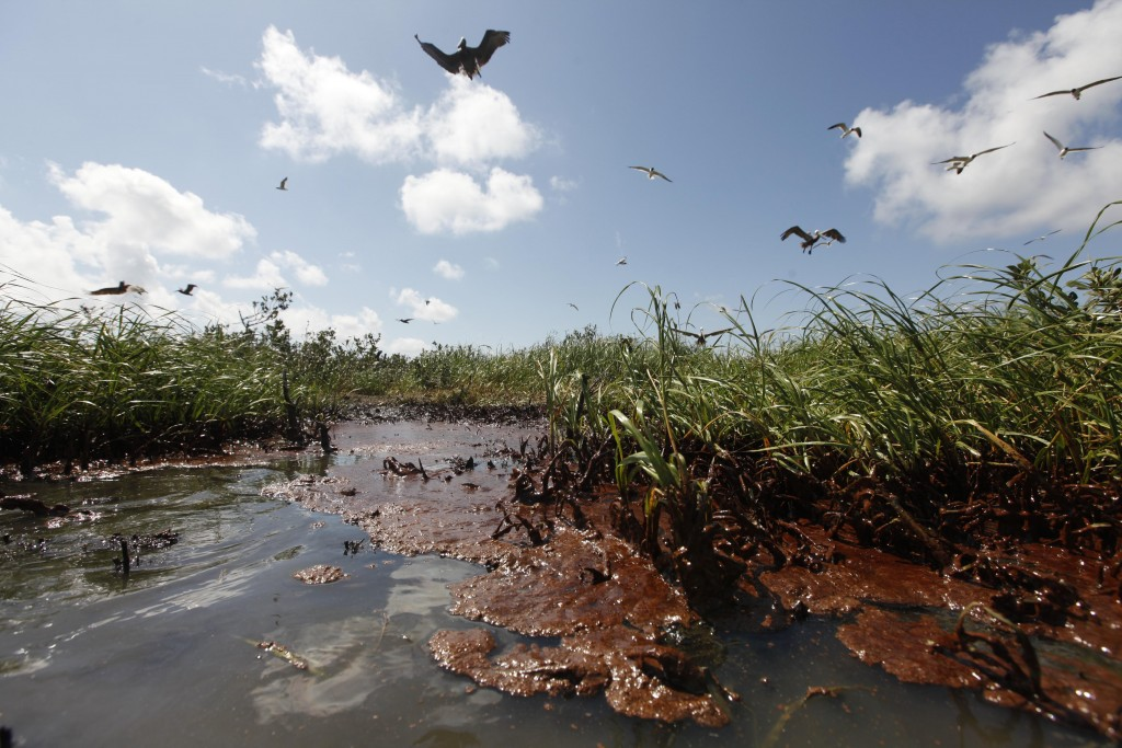 """Oil Comes Ashore Clumps of oil wash ashore on the island in Barataria Bay, May 22, 2010. """"I think we were all lulled into a sense of false hope that the oil maybe would just stay off shore,"""" photographer Gerald Herbert says. (AP Photo/Gerald Herbert)"""