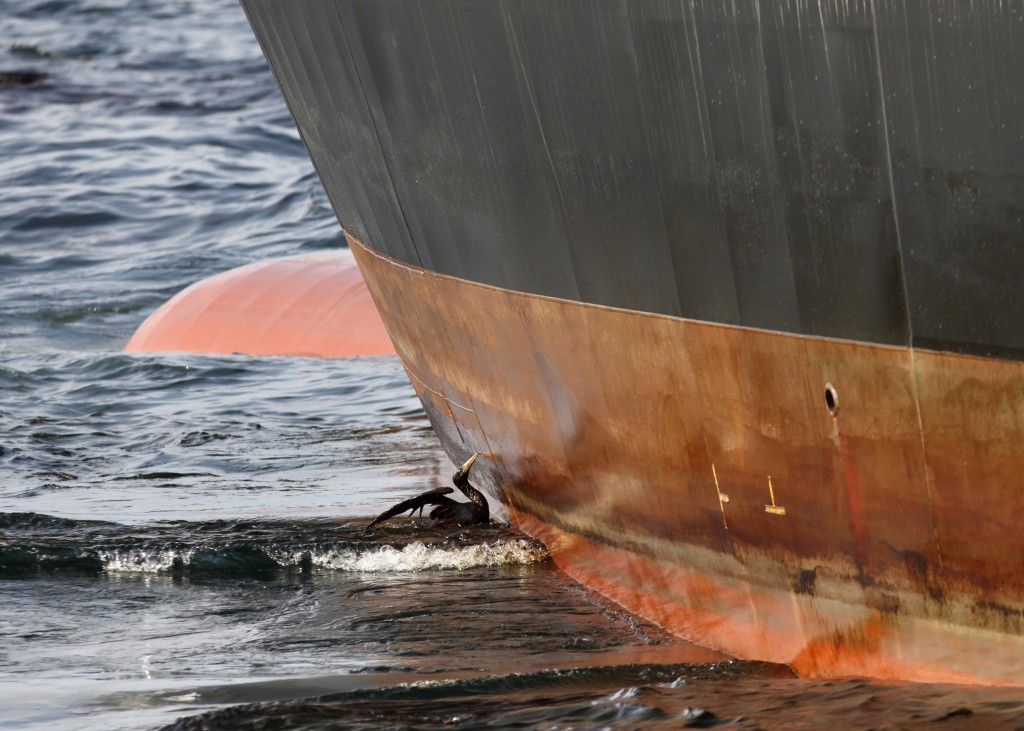 An Oil-soaked Struggle An oil-soaked bird struggles against the oil slicked side of the HOS Iron Horse supply vessel at the site of the Deepwater Horizon oil spill, May 9, 2010. (AP Photo/Gerald Herbert)