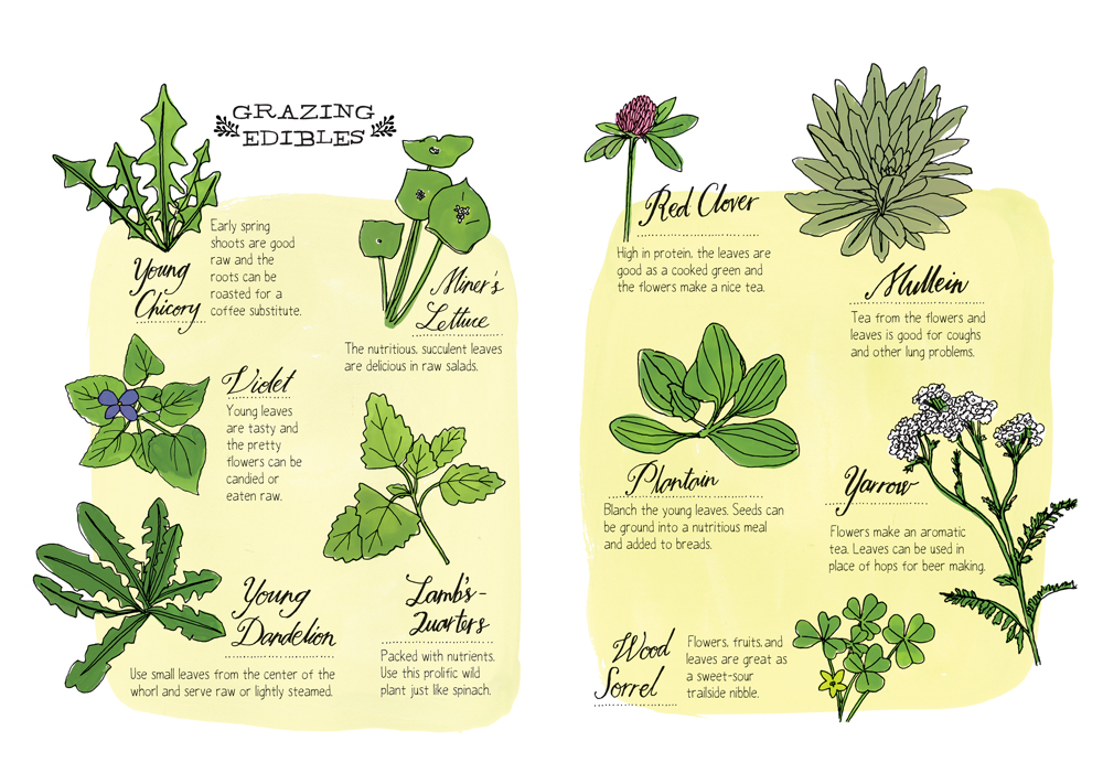 "More edibles that could be foraged in a forest. Excerpted from ""Nature Anatomy"" by Julia Rothman. Used with permission of Storey Publishing"
