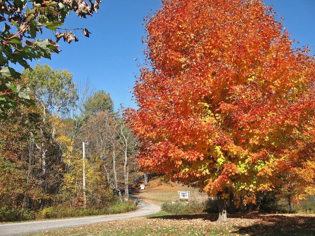 Autumn Colors By Russ Wiliams/Kieve