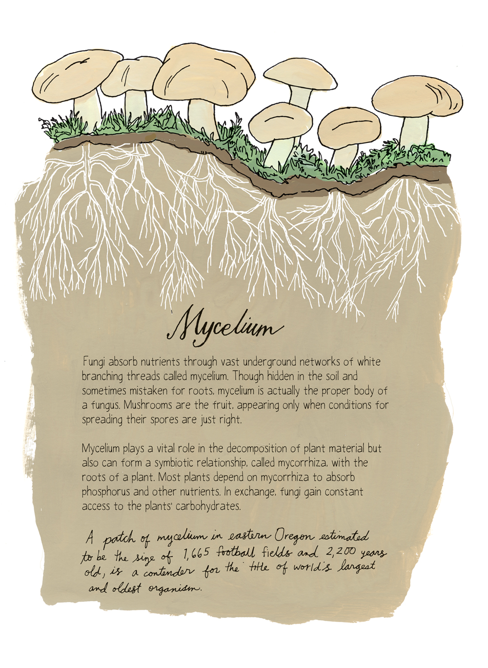 "Rothman's book covers both the micro and macro in nature. For example, the book includes the anatomy of a mushroom and its life cycle to fungal colonies. Excerpted from ""Nature Anatomy"" by Julia Rothman. Used with permission of Storey Publishing"