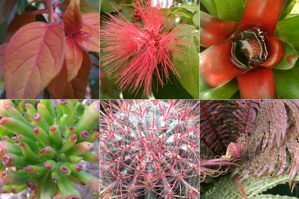 While visiting the local botanical gardens, I took pictures of every plant that jumped out at me while wearing the EnChroma glasses. Photos by Joshua Barajas