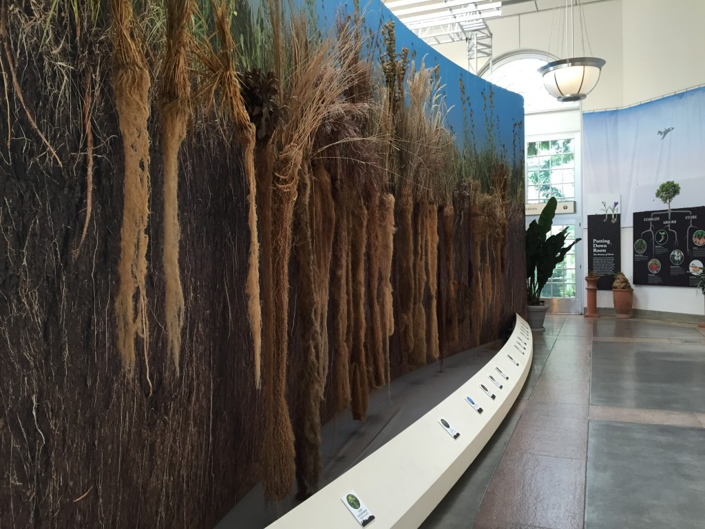 A bevy of prairie plants and their roots hang at the U.S. Botanic Garden. Photo by Nsikan Akpan