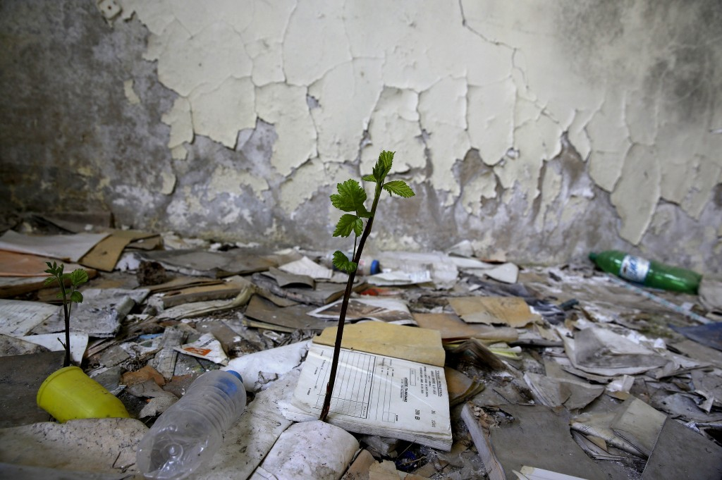 A wild plant grows inside a deserted insulation factory that closed in the 1980s near the town of Xanthi in Thrace region, Greece April 25, 2015. Photo by Yannis Behrakis/Reuters