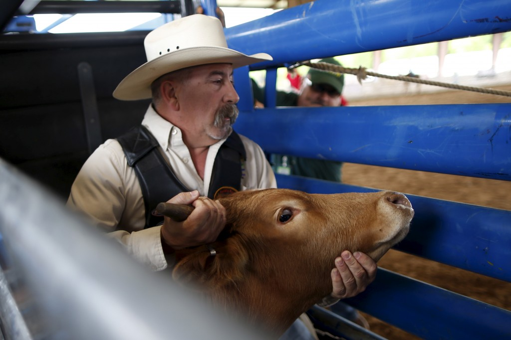 Greg Smith, 47, prepares to wrestle a steer at the International Gay Rodeo Association's Rodeo In the Rock in Little Rock, Arkansas, United States April 26, 2015. Photo by Lucy Nicholson/Reuters