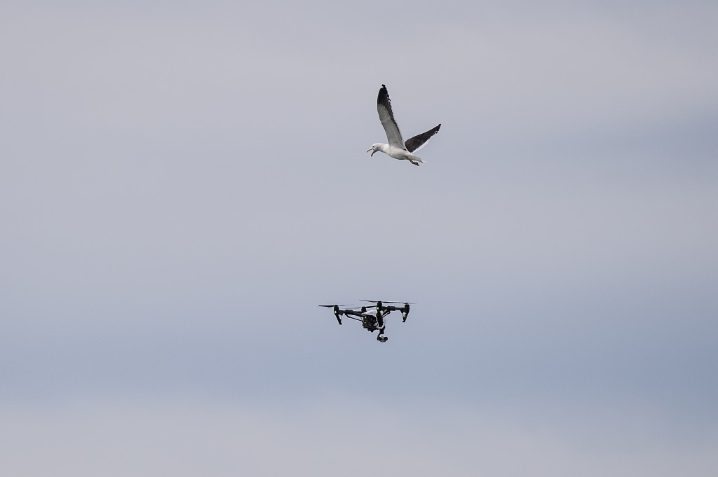 Seagulls attack a drone at the JBay Open on July 14, 2015 in Jeffreys Bay, South Africa. Photo by Kirstin Scholtz/WSL via Getty Images