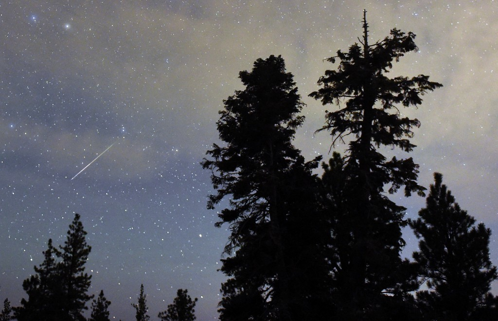 A Perseid meteor streaks across the sky above desert pine trees on August 13, 2015 in the Spring Mountains National Recreation Area, Nevada. Photo by Ethan Miller/Getty Images