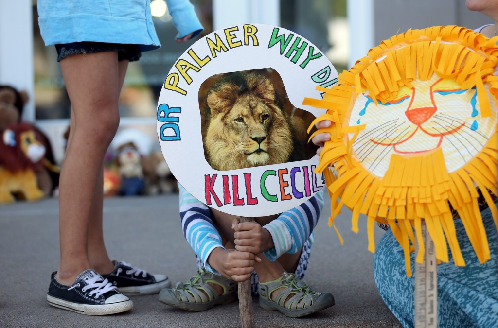 why did cecil the lion die what you should know about trophy  why did cecil the lion die what you should know about trophy hunting newshour