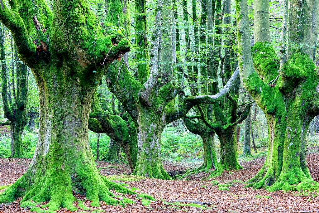 Can you guess how many trees are on Earth?