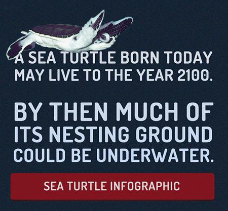 sea-turtle-info-promo-1