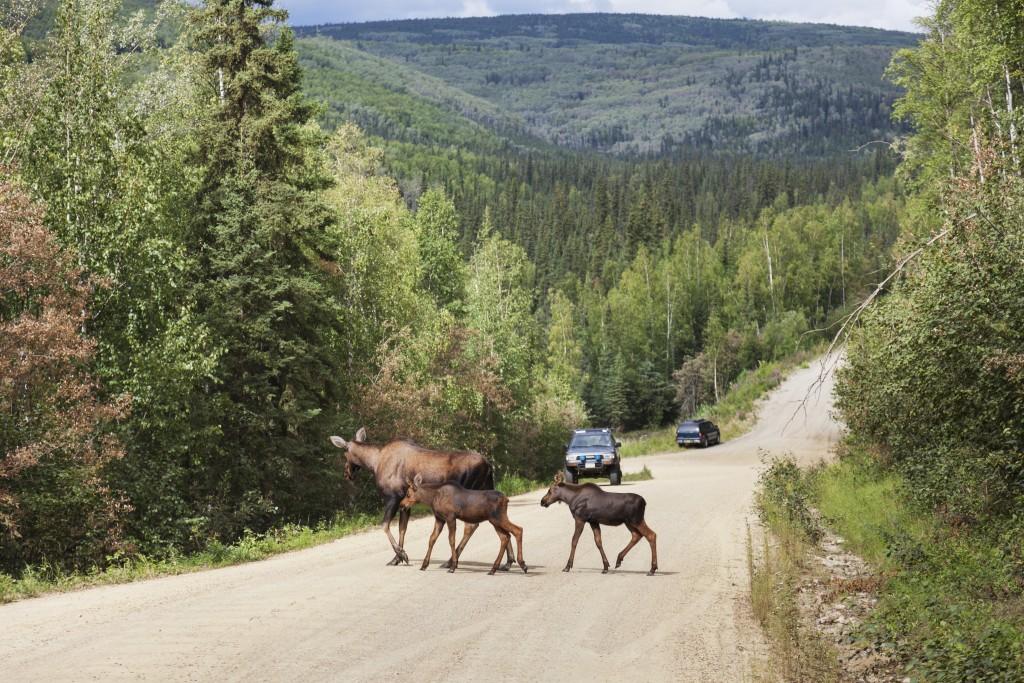 Santa claus runs for office in north pole alaska pbs - Interior women s health fairbanks ak ...