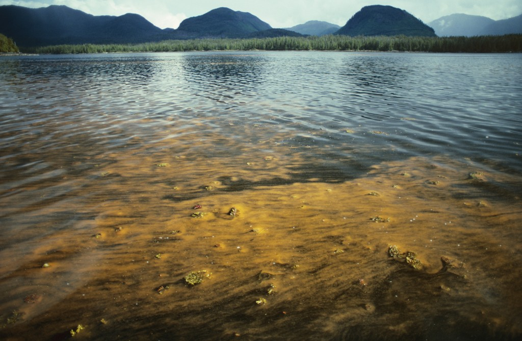 Red tide bloom of toxic dinoflagellates, like this one in southeast Alaska, can choke the sound from underwater life. Photo by Jeff Foott/via Getty Images