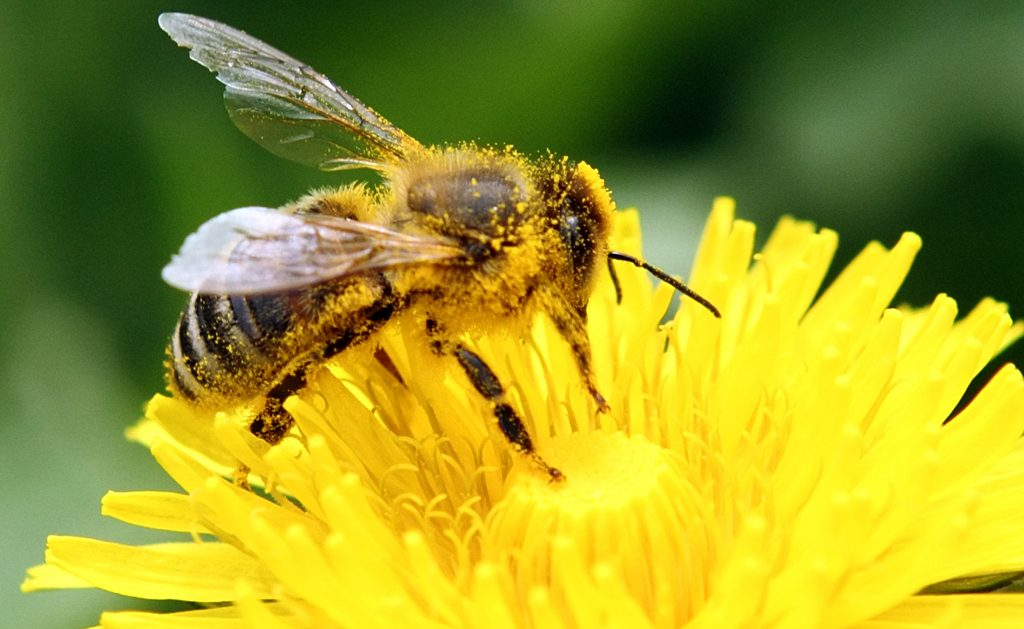 intelligence test shows bees can learn to solve tasks from other