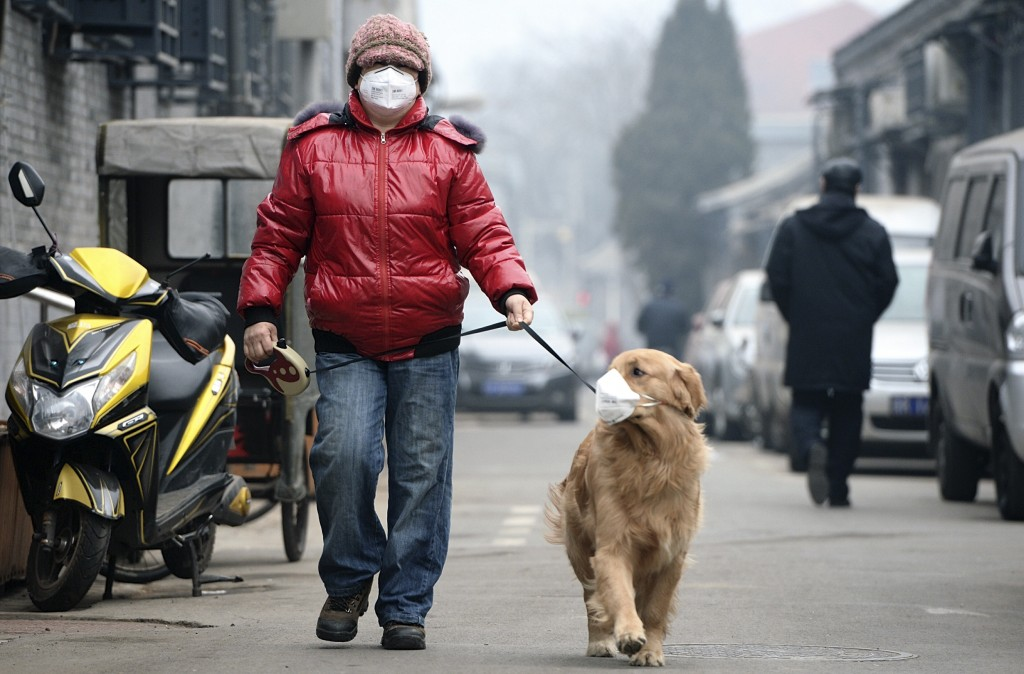 """A man and his dog, both wearing masks, walk along a small alley on a hazy day in Beijing, February 23, 2014. China's capital Beijing, under fire to take effective measures against air pollution, raised its four-tiered alert system to """"orange"""" for the first time on Friday, as heavy smog was forecast to roll into the city over the next three days. REUTERS/Legal Evening/Liu Chang (CHINA - Tags: ANIMALS ENVIRONMENT SOCIETY TPX IMAGES OF THE DAY) CHINA OUT. NO COMMERCIAL OR EDITORIAL SALES IN CHINA - RTX19CFA"""
