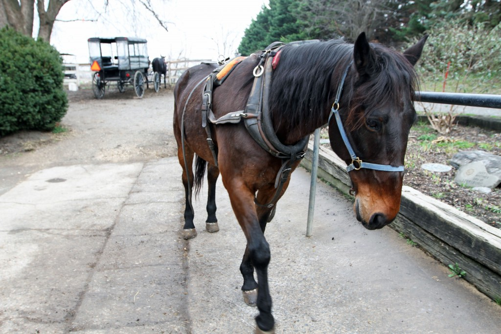 Syrian refugees find a safe haven in Amish country