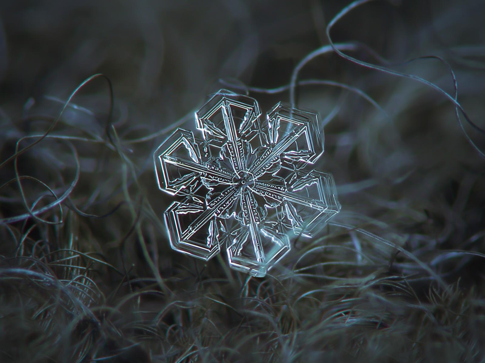 snowflake80
