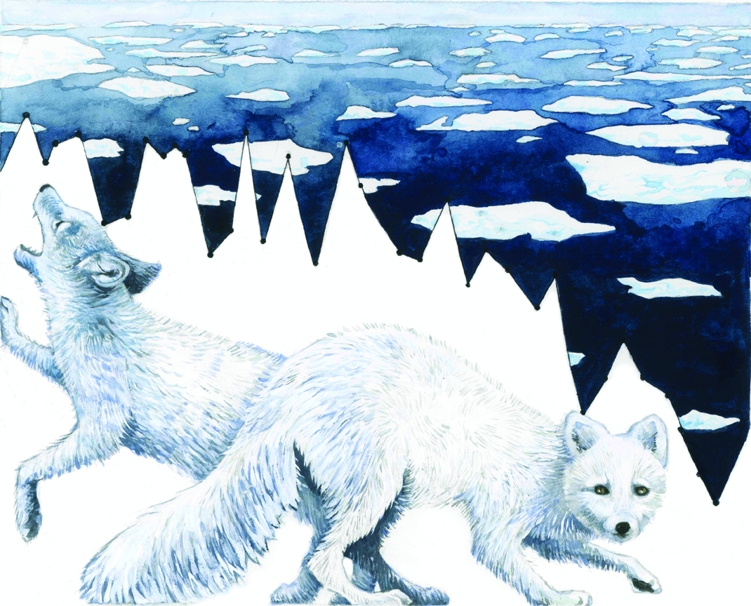 """Habitat Degradation: Arctic Melt"" shows Arctic sea ice data from 1980 to present. Rapid warming in the Arctic has caused the sea ice area to decline so quickly that species cannot adjust. The Arctic fox is small and extraordinarily resilient to the most severe cold. They can withstand the frigid north and thus have this corner of the world in which to hunt. But when the temperatures mellow, competition from larger species could overcome them, as other species move further north to escape their own warming environment.  Photo and caption by Jill Pelto"