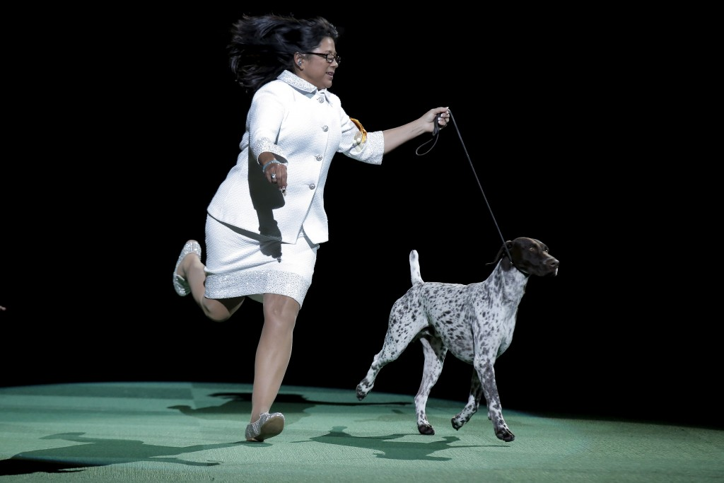 Handler Valerie Nunez Atkinson runs with CJ, top dog at this year's Westminster dog show. Photo by Brendan McDermid/Reuters