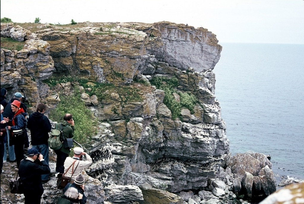 Tourist group looking at the common guillemot colony in island of Stora Karlsö in 1975. Photo by Lars-Erik Norbäck/Hentati-Sundberg and Olsson, Current Biology, (2016).
