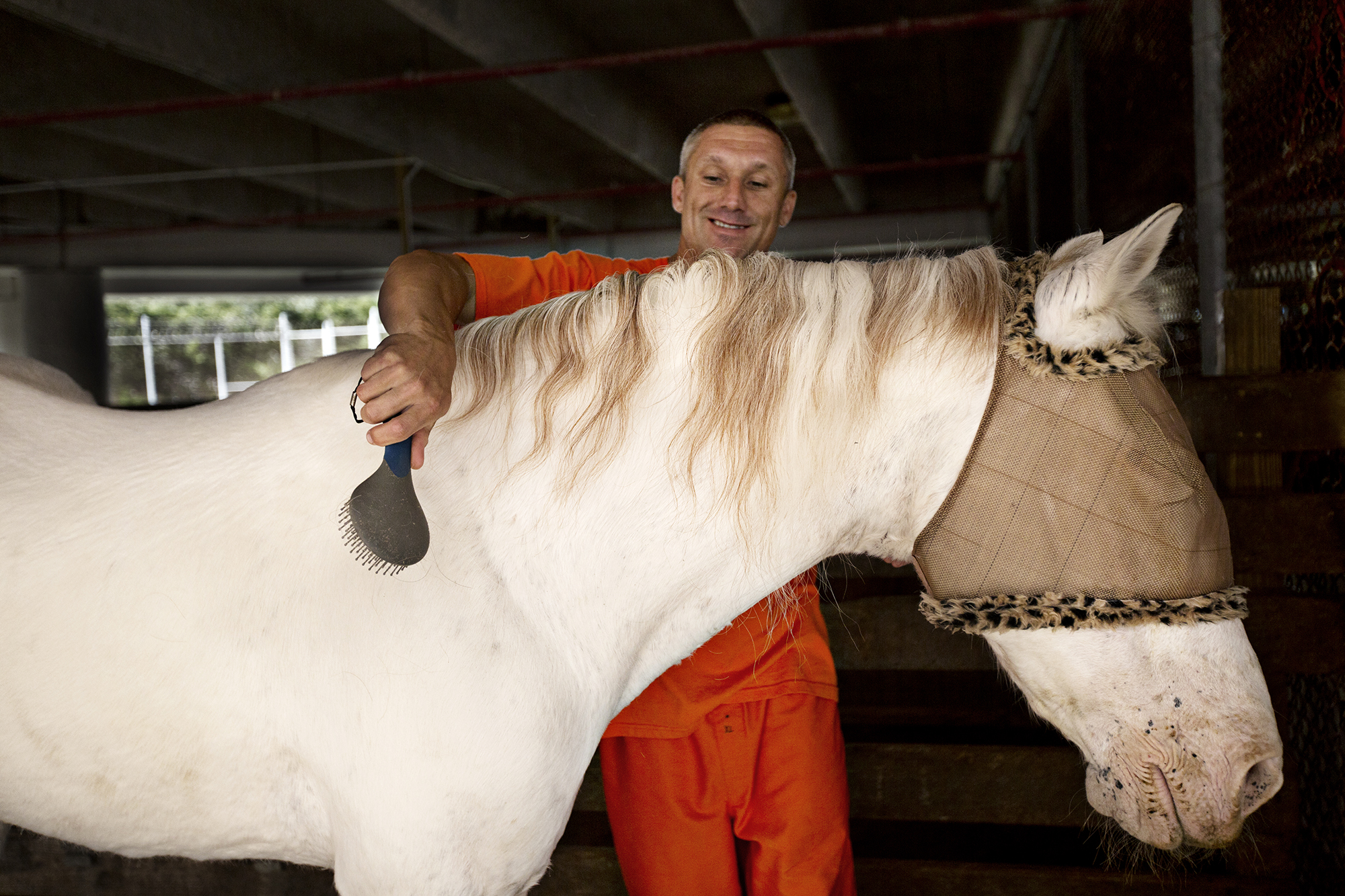 "Inmate Michael Smith brushes ""Ghost"" an elderly blind horse at the Monroe County Sheriff's Office Animal Farm. ""Ghost"" was abandoned by his owner in a remote area of Miami-Dadd county and left to die. He came to the farm just skin and bones.  Working with ""Ghost"" teaches patience to the inmates. They have to be gentle and build trust in order to care for him because he frightens easily.  Photo by Kim Raff"