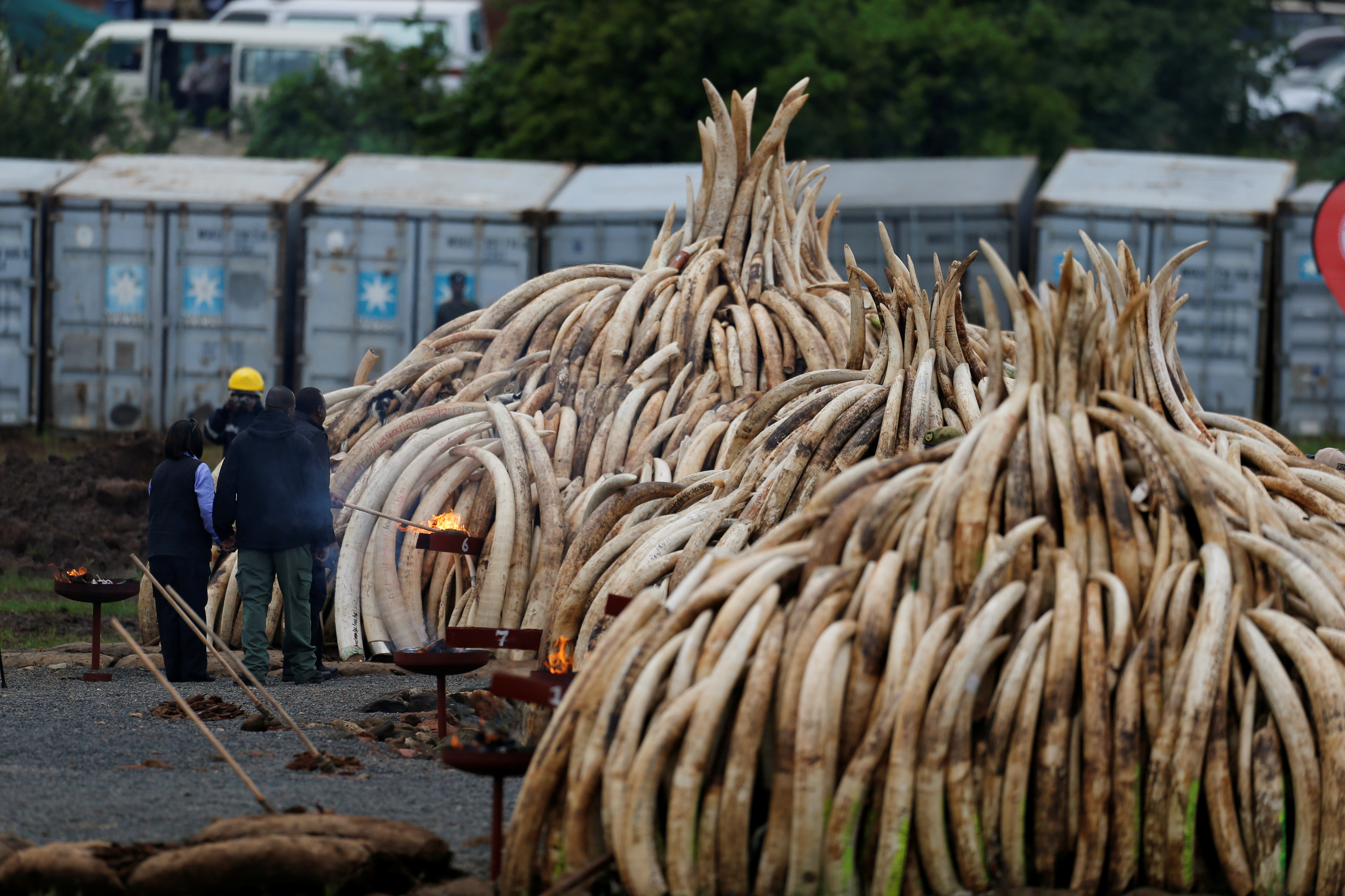 Kenya's President Uhuru Kenyatta lights elephant tusks, part of an estimated 105 tonnes of confiscated ivory from smugglers and poachers, on fire at Nairobi National Park near Nairobi, Kenya, April 30, 2016. REUTERS/Thomas Mukoya - RTX2C8K6